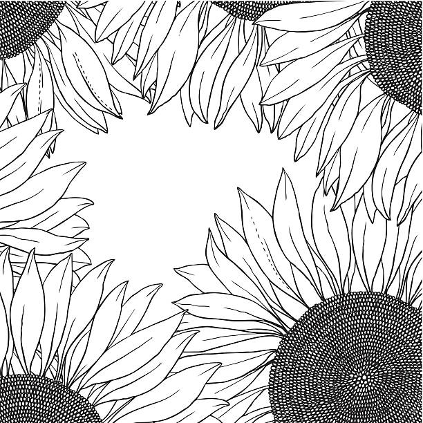 Frame Of Vector Sunflowers Art Illustration Black And White