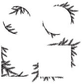 Vector frame with pine tree leaves