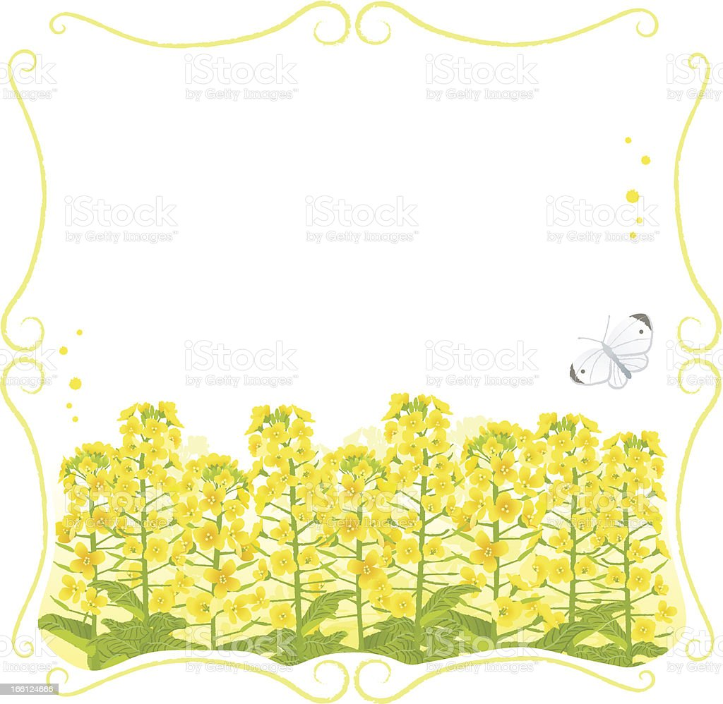 Framed Canola flowers with copy space vector art illustration