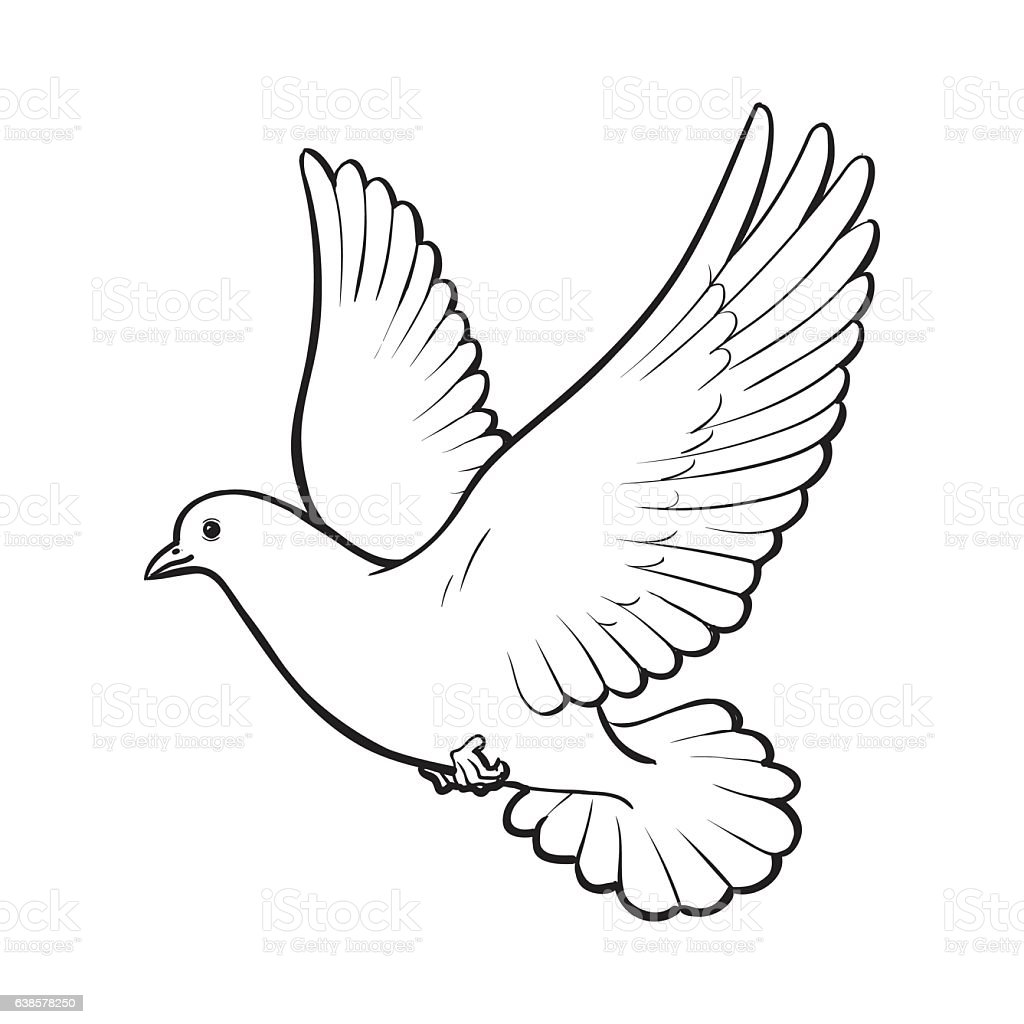 Free Flying White Dove Isolated Sketch Style Illustration ...