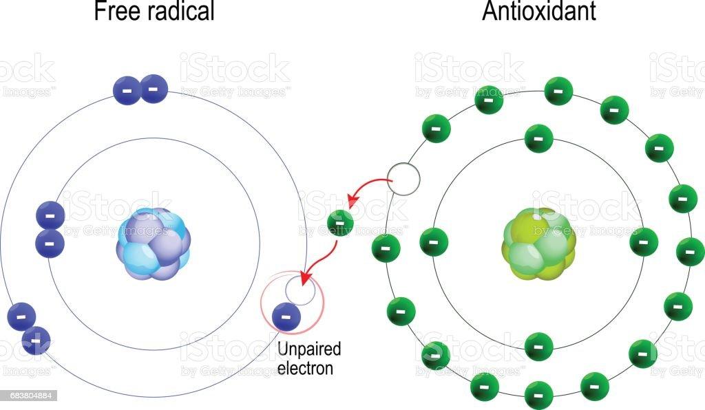 radicales libres y antioxidantes. - ilustración de arte vectorial