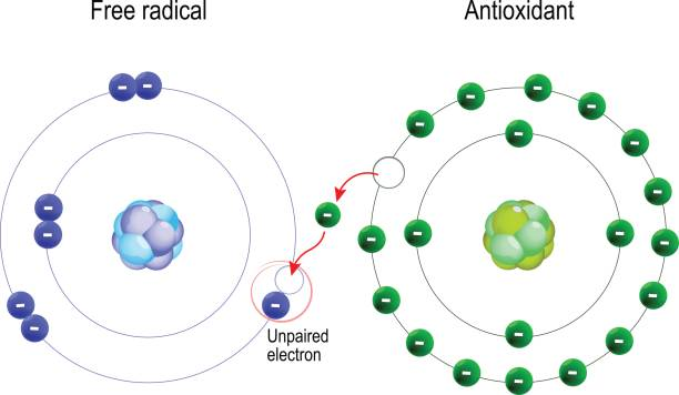 illustrations, cliparts, dessins animés et icônes de radicaux libres et antioxydants. - antioxydant
