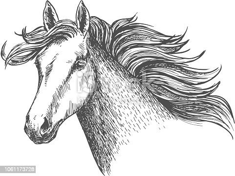 Freely running white beautiful horse mare. Mustang head portrait with waving main in wind. Vector sketch icon for sport races emblem, hippodrome label, picture decoration design element