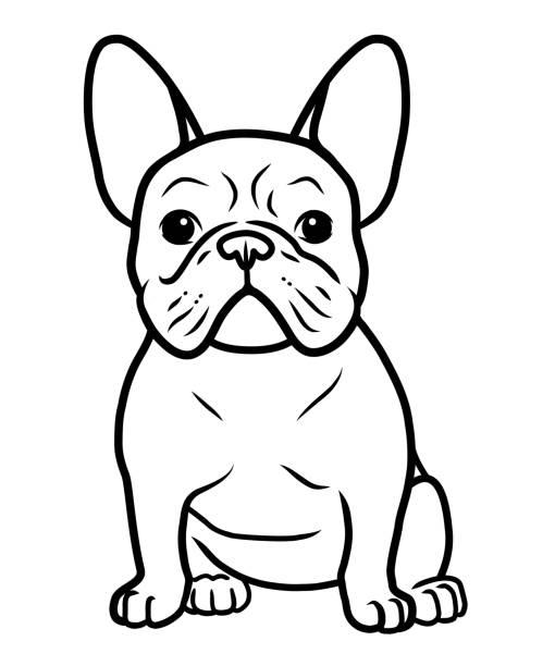 bildbanksillustrationer, clip art samt tecknat material och ikoner med franska bulldog svart och vitt handritade tecknad porträtt vektor illustration. rolig fransk bulldog valp sitter och ser fram emot. hundar, hus djur tema design element, ikon, logo typ, målar bok sida - bulldog