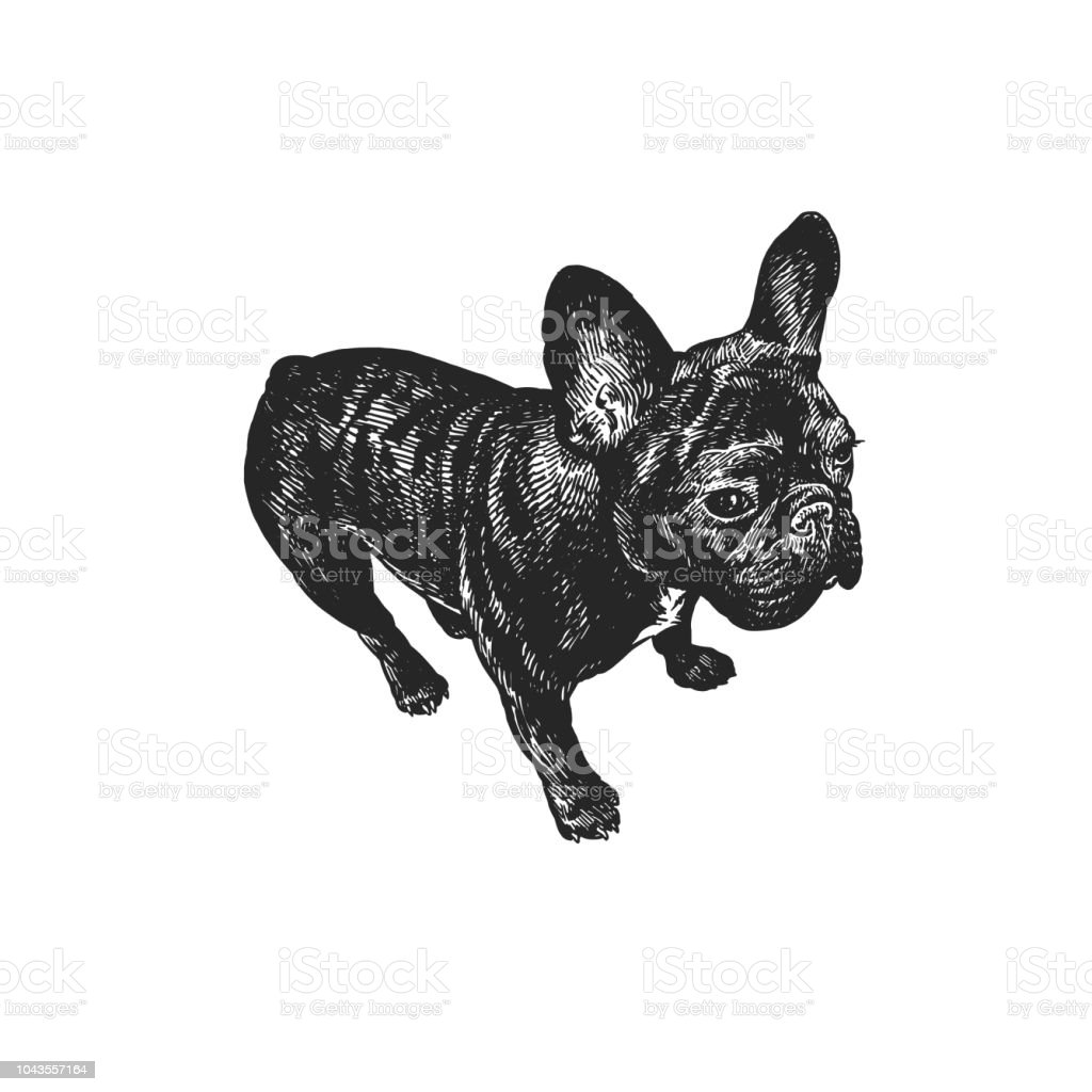 French Bulldog Dog Cute Puppy Black And White Hand Drawing Stock