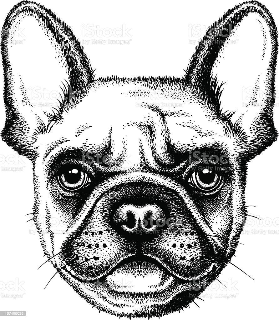 French Bulldog face vector art illustration