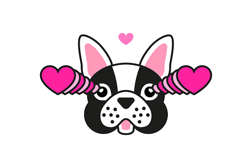French bulldog fall in love meme sticker isolated on white