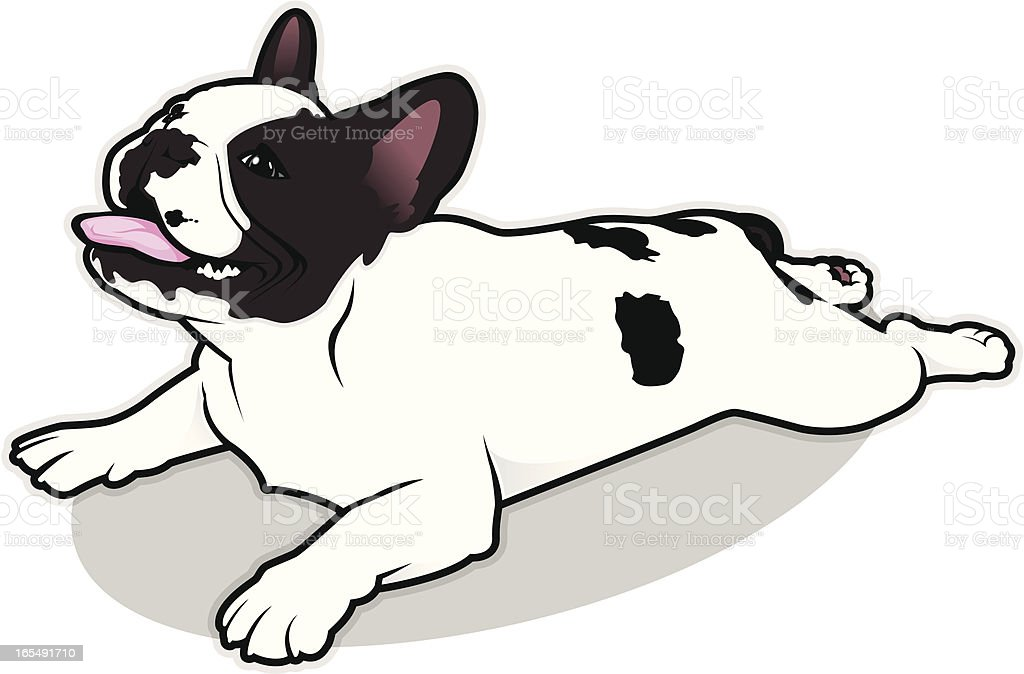 royalty free french bulldog clip art vector images illustrations rh istockphoto com french bulldog clipart free