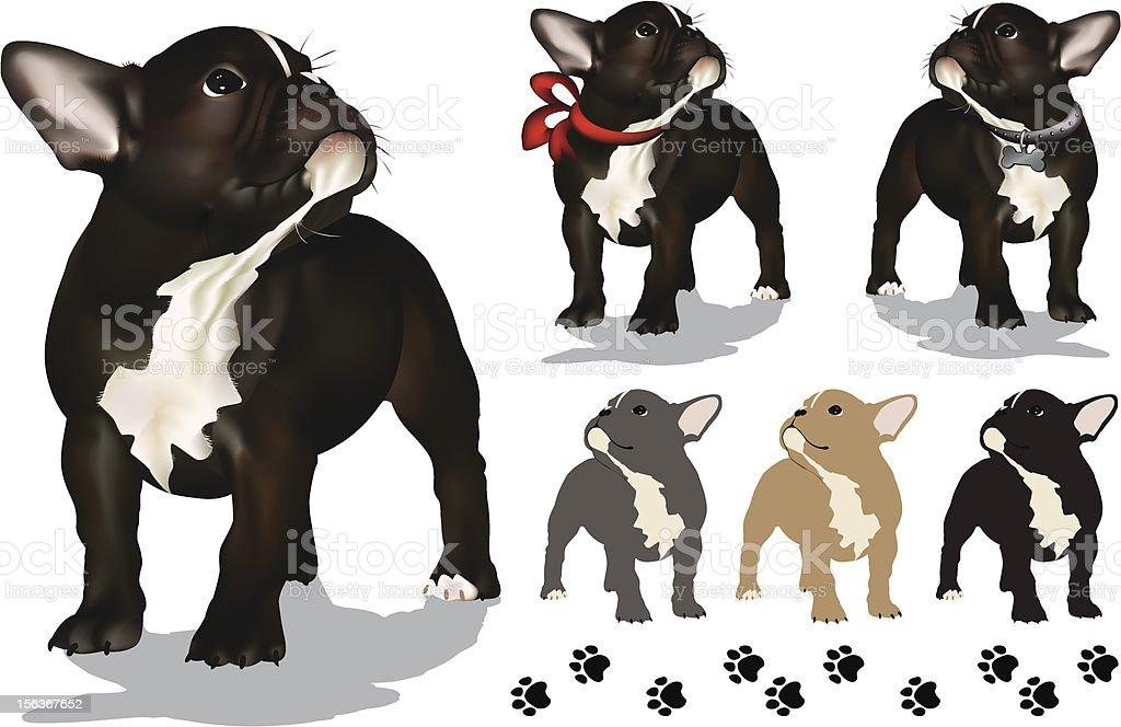 French Bulldog Puppy vector art illustration