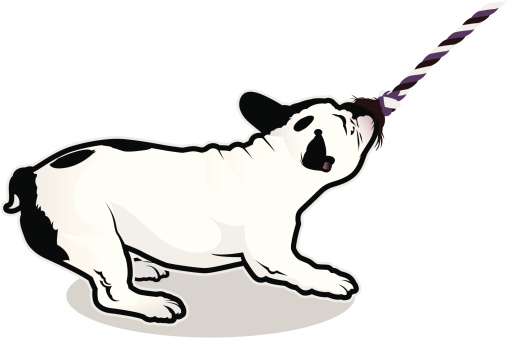 French Bulldog Tugging On A Rope