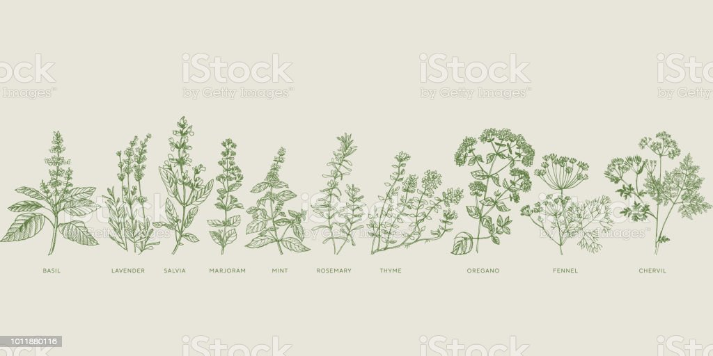 French cooking herbal sketch set royalty-free french cooking herbal sketch set stock illustration - download image now