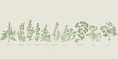 French cooking herbal sketch set. Basil, lavender, salvia, marjoram, mint, rosemary, thyme, oregano, fennel, chervil hand drawn design element.