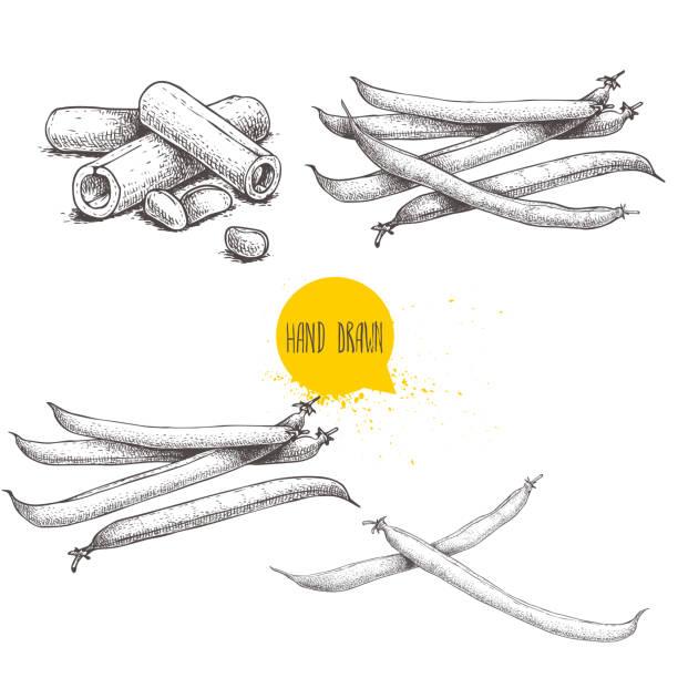 프랑스 그린 콩 깍 지 설정합니다. 컬렉션의 손으로 그린된 스케치. 전체 고 잘라입니다. 벡터 일러스트 레이 션 흰색 배경에 고립. 건강 한 유기농 식품 컬렉션입니다. - 그린빈 stock illustrations