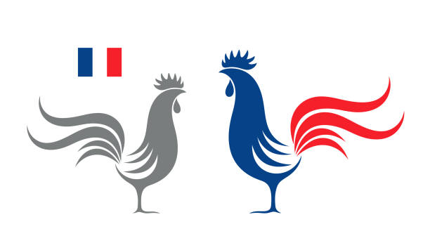 French rooster. Isolated rooster on white background EPS 10. Vector illustration rooster stock illustrations