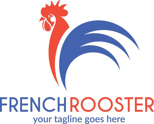 French rooster Vector illustration (EPS) rooster stock illustrations