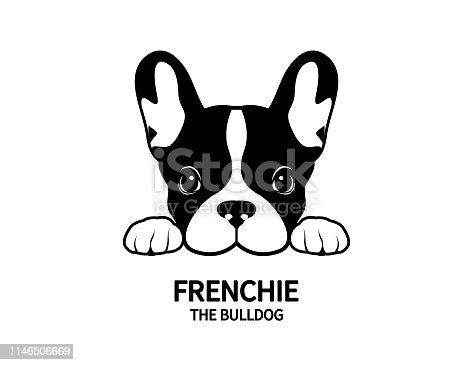 Adorable French Bulldog waiting for his snacks. Cute Frenchie with bunny ears in black & white