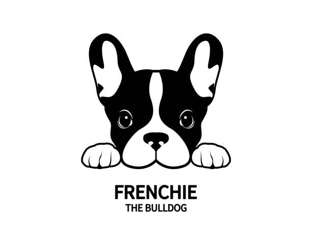 bildbanksillustrationer, clip art samt tecknat material och ikoner med frenchie den bulldog face porträtt symbol. - bulldog