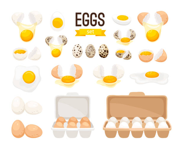 Fresh and boiled eggs Fresh and boiled eggs. Cartoon broken eggs with cracked eggshell, in cardboard box and egg half with yolk vector illustration animal stage stock illustrations