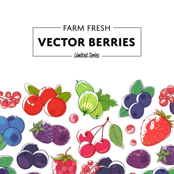 Fresh and juicy berries retail poster Fresh and juicy berries retail poster with ripe raspberry, blackberry, strawberry, gooseberry, currant, blueberry and cherry. Natural organic farming, healthy food, vegan nutrition vector illustration berry fruit stock illustrations