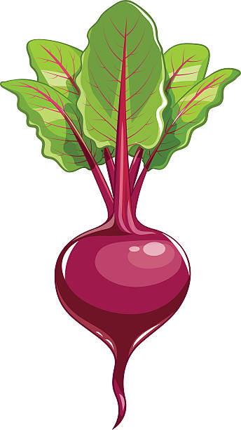 Fresh beet with leaf Fresh beet with leaf. Vector illustration. Isolated white background. Juicy beetroot. vegetable. Organic food. Natural Root. Vegetable Ingredient for food beet stock illustrations