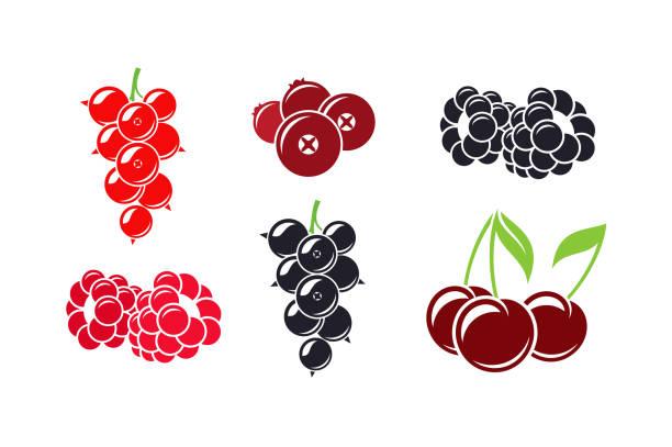 bildbanksillustrationer, clip art samt tecknat material och ikoner med färska bär. isolerade hallon vinbär cherry tranbär och björnbär på vit bakgrund - hallon