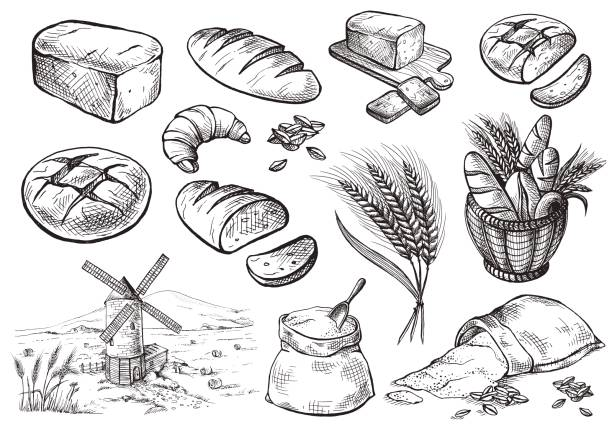 Fresh Bread set Bread vector hand drawn set illustration in graphic style bread drawings stock illustrations