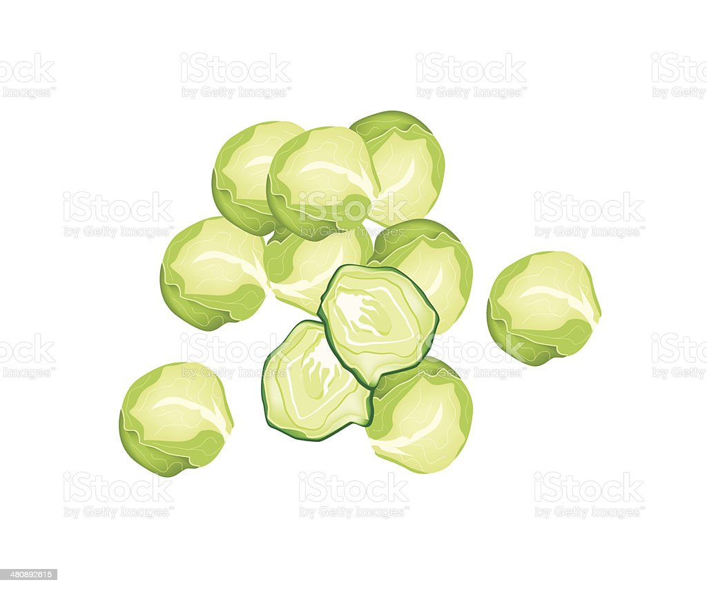 Fresh Brussels Sprout on A White Background vector art illustration