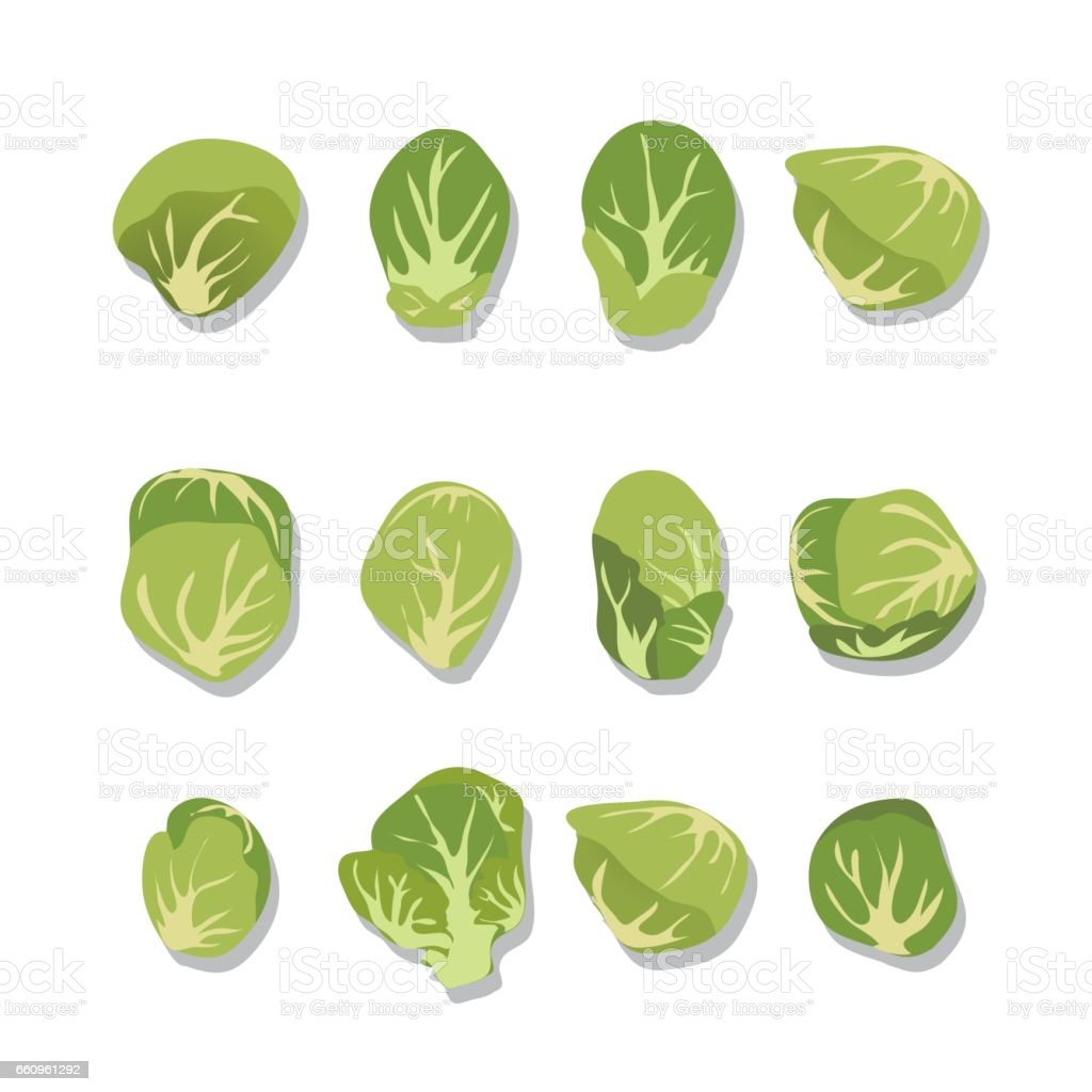 Fresh Brussels Sprouts On White Background. vector art illustration