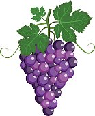 Fresh bunch of grapes purple icon on white background. vector illustration in flat style.
