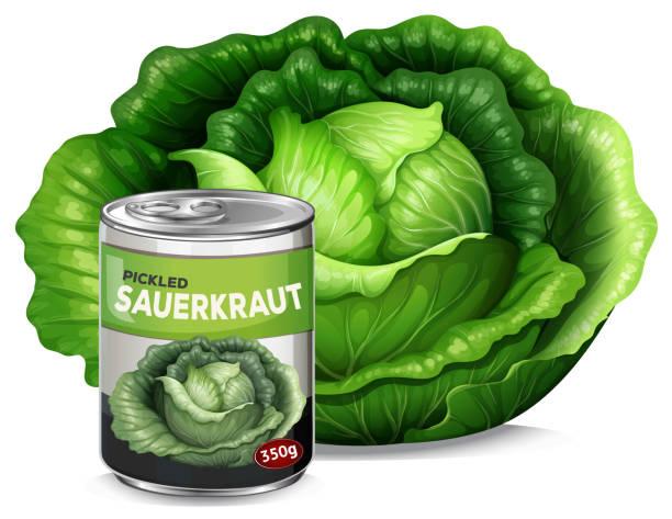 ein frischer kohl und dose sauerkraut - sauerkraut stock-grafiken, -clipart, -cartoons und -symbole