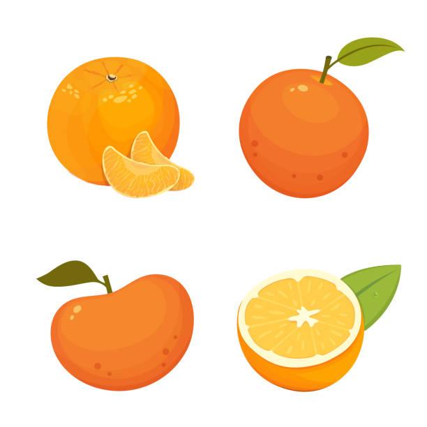 ilustrações de stock, clip art, desenhos animados e ícones de fresh citrus fruits isolated vector illustration with tangerine, grapefruit, orange. - orange