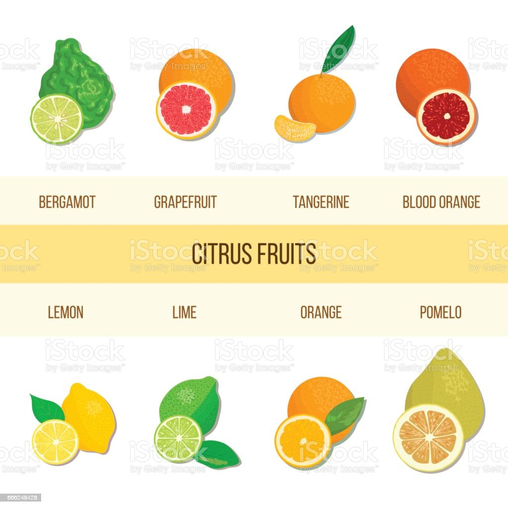 Fresh Citrus set. Bergamot, lemon, grapefruit, lime, mandarin, pomelo, orange, blood orange with slices vector art illustration