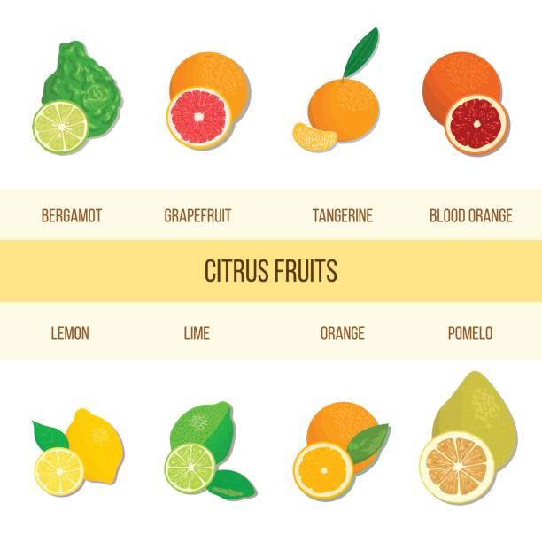 Fresh Citrus set. Bergamot, lemon, grapefruit, lime, mandarin, pomelo, orange, blood orange with slices vector art illustration