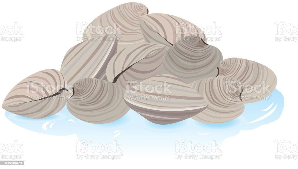 Fresh Clams in the shell royalty-free stock vector art