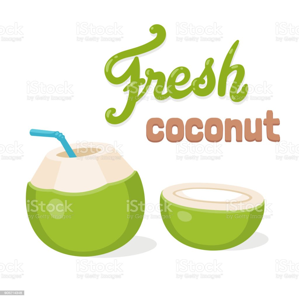 Green coconut vector