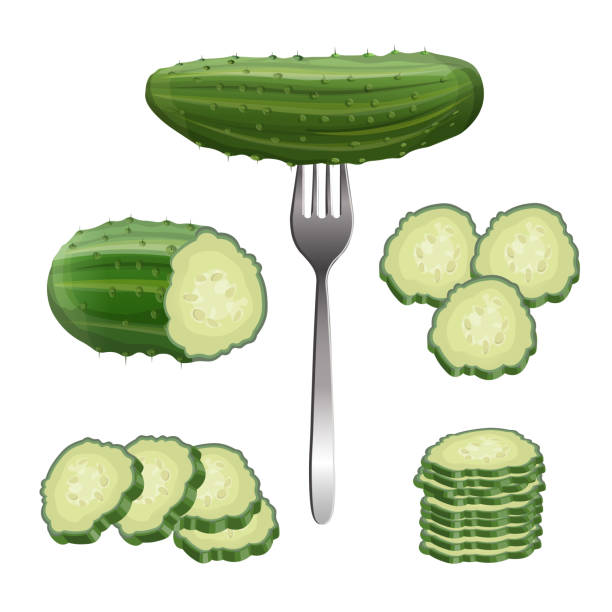 Fresh cucumber set, vector in realistic style Cucumber set. Whole, half, slices and cucumbers group. Vector illustration isolated on white background pickle slice stock illustrations