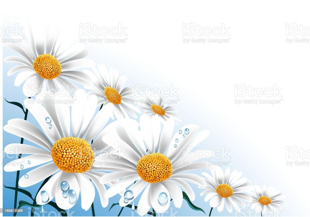 fresh daisy vector art illustration