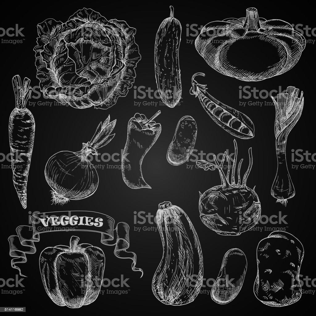 Fresh farm vegetables chalk sketches set vector art illustration