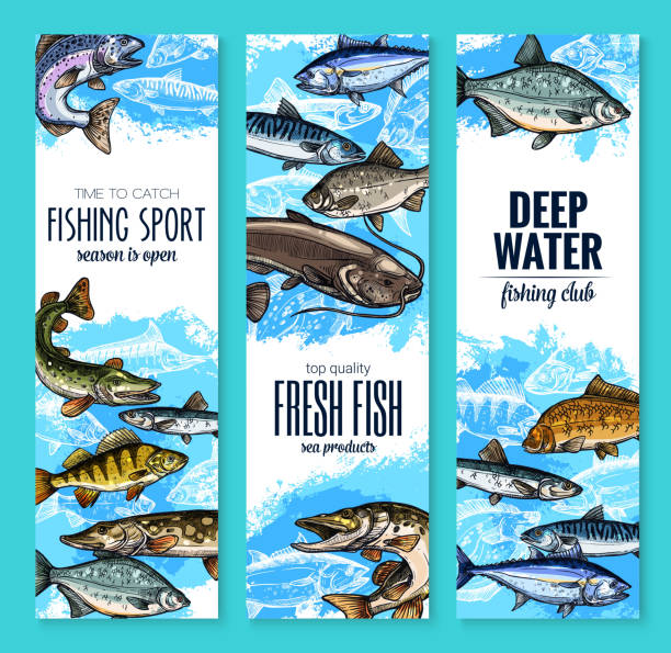 fresh fish banner for seafood and fishing design - fishing stock illustrations