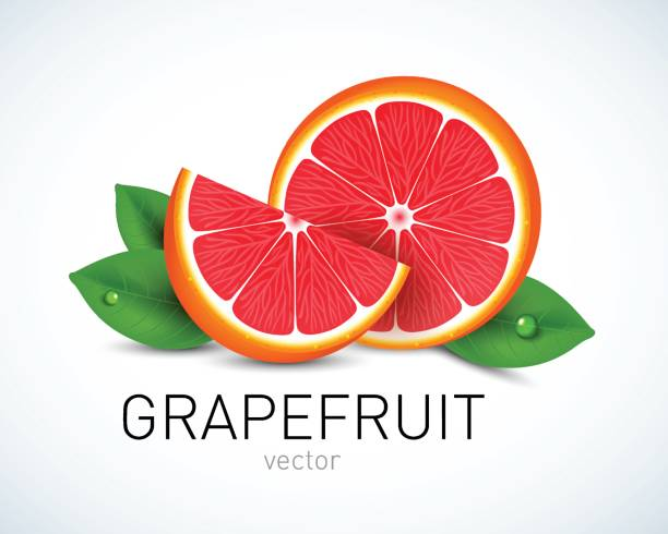 Royalty Free Pink Grapefruit Clip Art, Vector Images & Illustrations - iStock