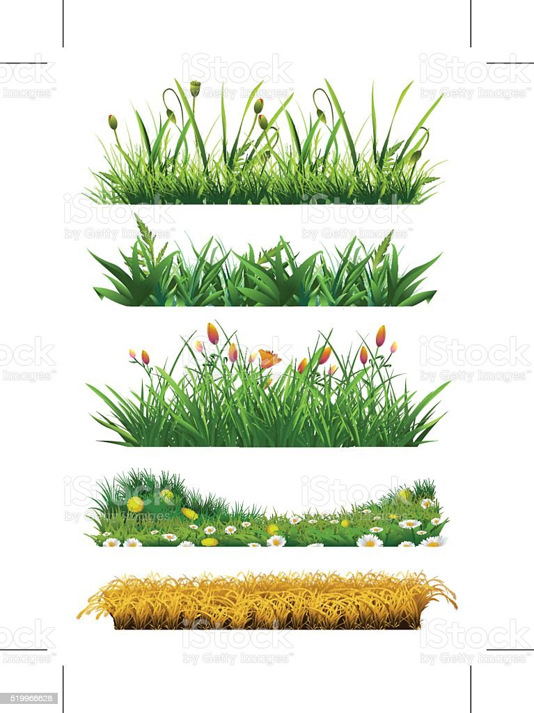 Fresh grass vector art illustration