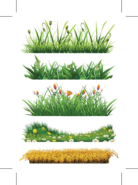 stockillustraties, clipart, cartoons en iconen met fresh grass - grasspriet