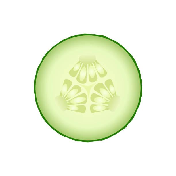 frische grüne gurke scheibe isoliert auf weißem hintergrund. - scheibe portion stock-grafiken, -clipart, -cartoons und -symbole