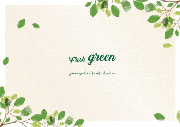 illustrazioni stock, clip art, cartoni animati e icone di tendenza di fresh green frame - verde