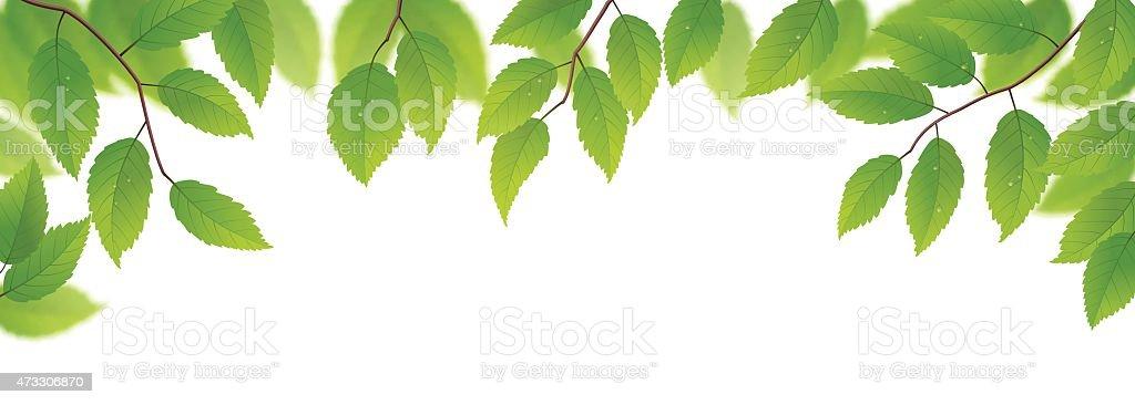 Fresh green leaves vector art illustration