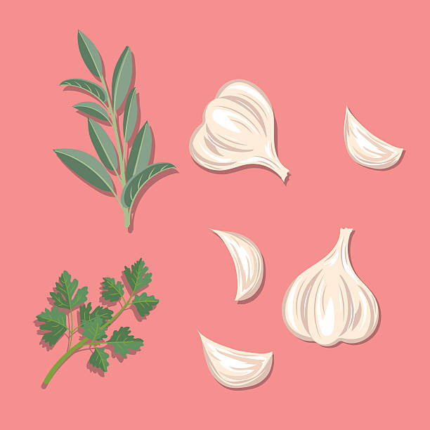 Fresh Herbs: Garlic, Sage And Parsley Cooking Elements - Fresh Herbs: Garlic, Sage And Parsley. garlic stock illustrations
