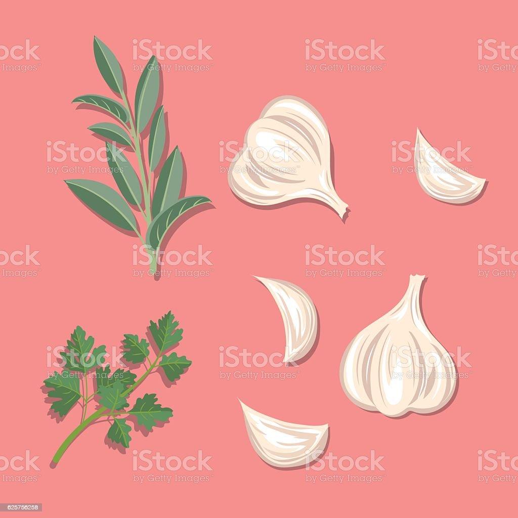 Fresh Herbs: Garlic, Sage And Parsley - ilustração de arte em vetor