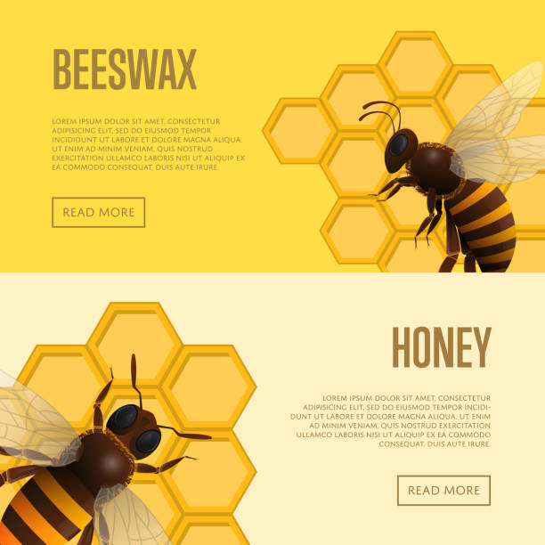 illustrazioni stock, clip art, cartoni animati e icone di tendenza di fresh honey and beeswax retail banners - impollinazione