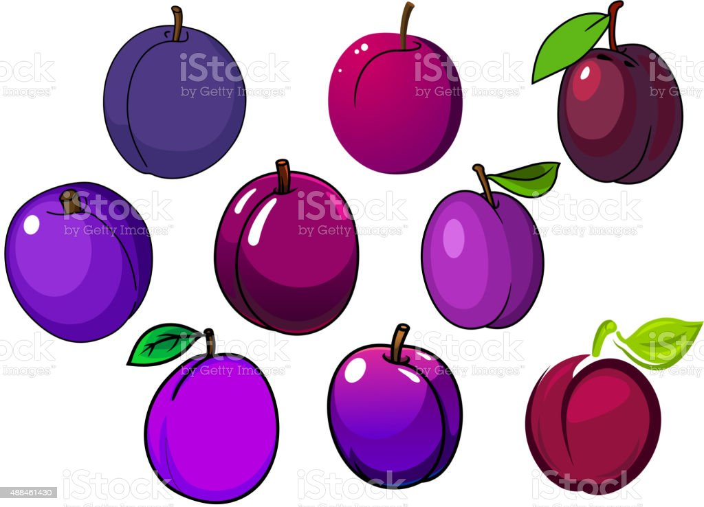 Fresh isolated purple and violet plum fruits vector art illustration