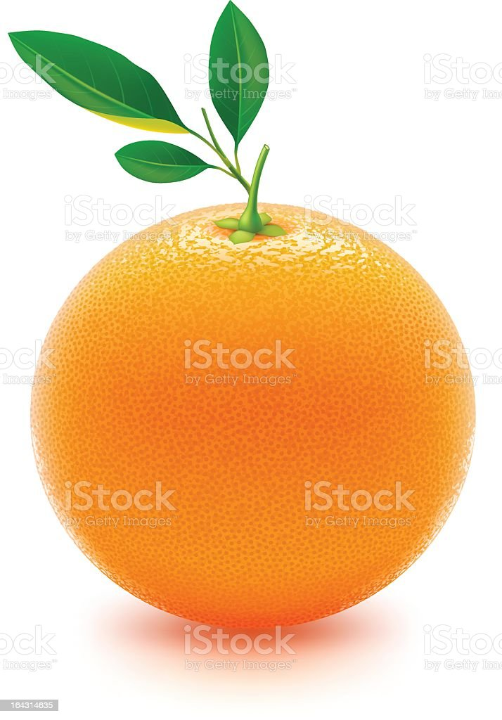 Fresh juicy orange in 3D on white background vector art illustration